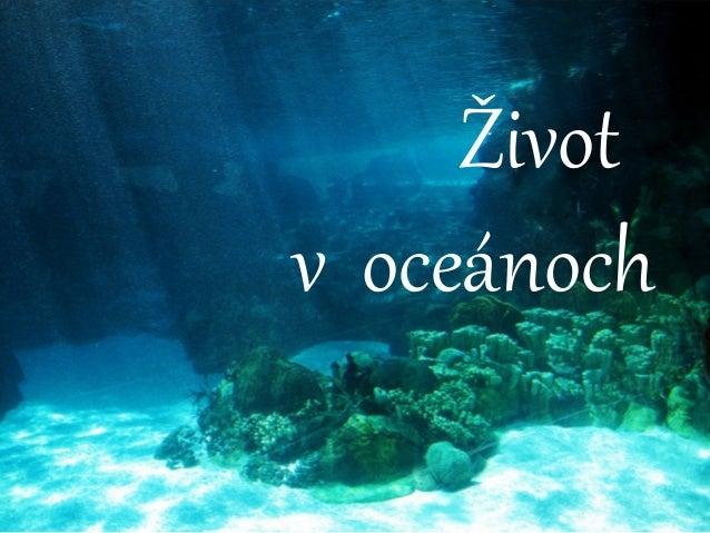 Život v oceánoch
