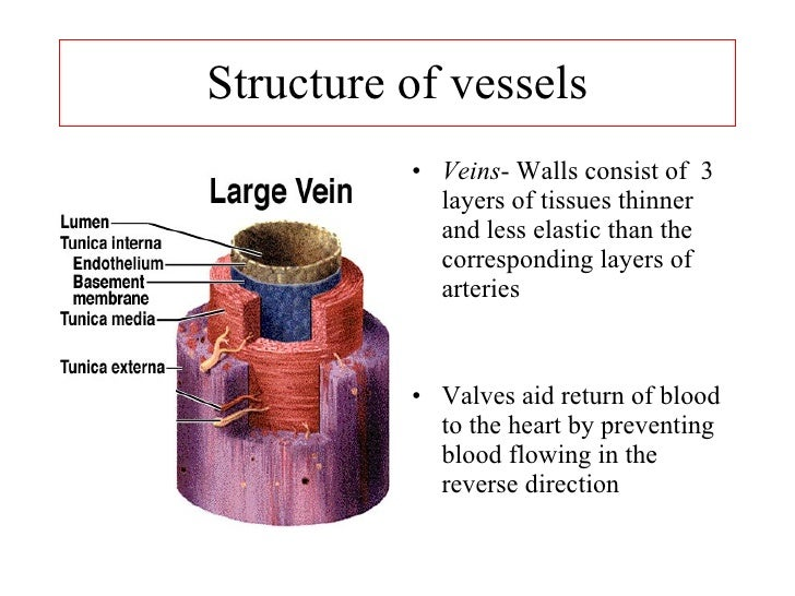 basilic and cephalic vein clinical application