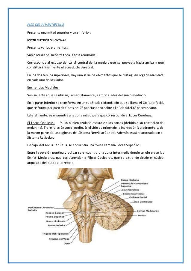 PISO DEL IV VENTRÍCULO Presenta una mitad superior y una inferior: MITAD SUPERIOR O PONTINA.: Presenta varios elementos: S...
