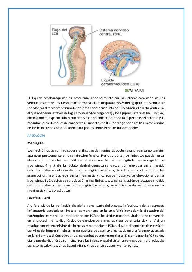 El liquido cefalorraquideo es producido principalmente por los plexos coroideos de los ventrículoscerebrales.Despuésde for...