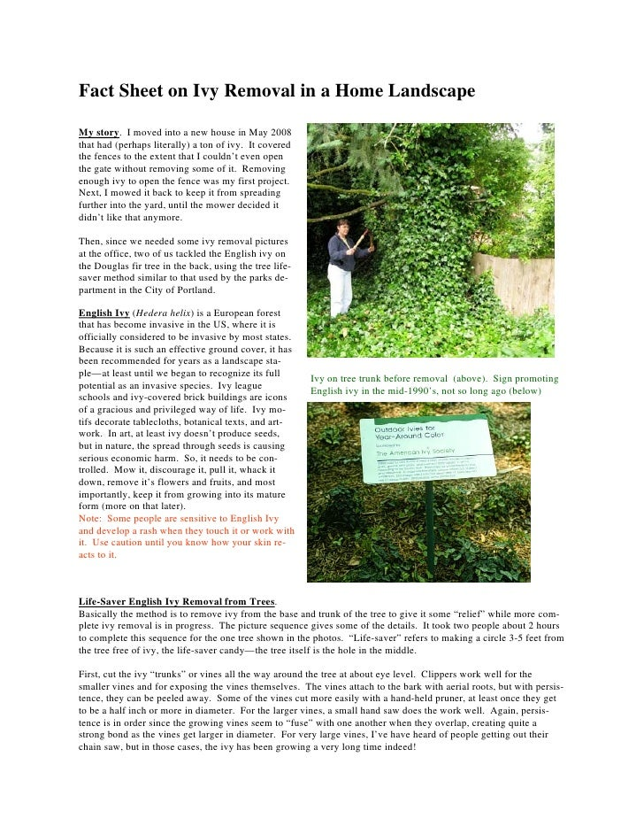 Fact Sheet on Ivy Removal in a Home LandscapeMy story. I moved into a new house in May 2008that had (perhaps literally) a ...