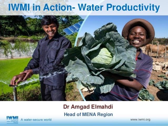 IWMI in Action- Water Productivity Dr Amgad Elmahdi Head of MENA Region