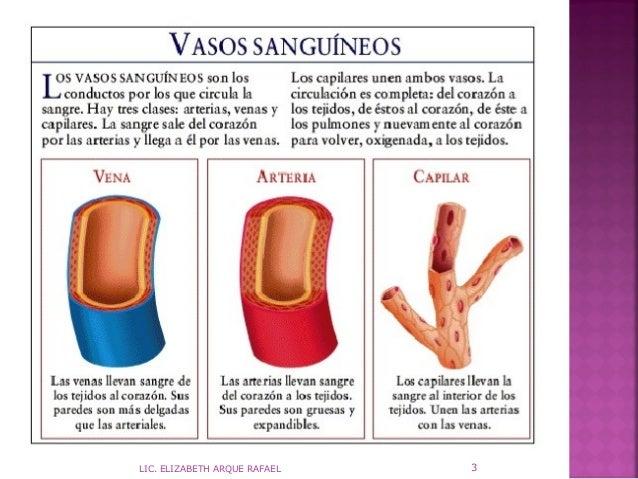 vasos-sanguineos-3-638.jpg?cb=1379937245