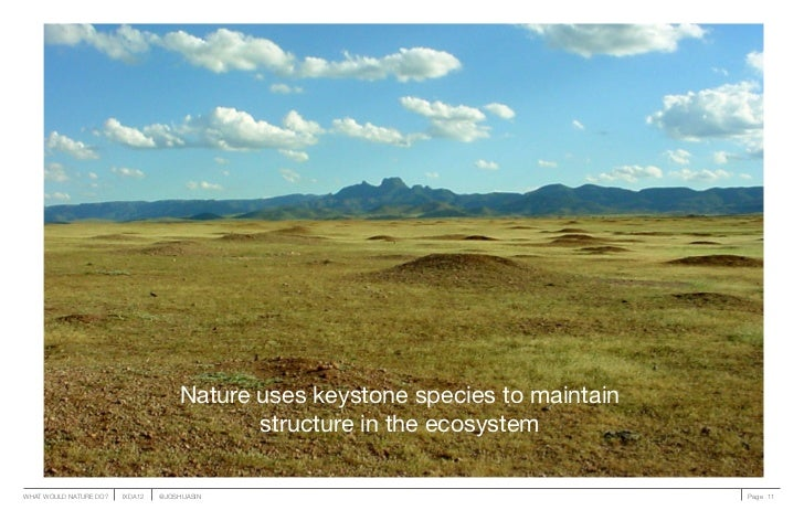 Nature uses keystone species to maintain                                            structure in the ecosystemWHAT WOULD N...