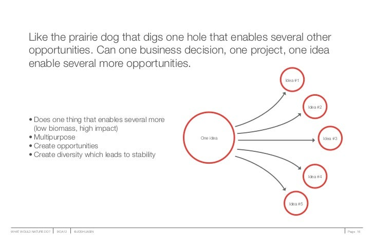 Like the prairie dog that digs one hole that enables several other         opportunities. Can one business decision, one p...