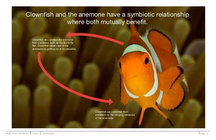 Clownfish and the anemone have a symbiotic relationship                               where both mutually benefit.        ...