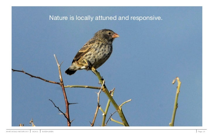 Nature is locally attuned and responsive.WHAT WOULD NATURE DO?   IXDA12   @JOSHUASIN                                      ...