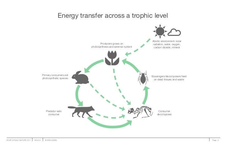 Energy transfer across a trophic level                                                                                    ...