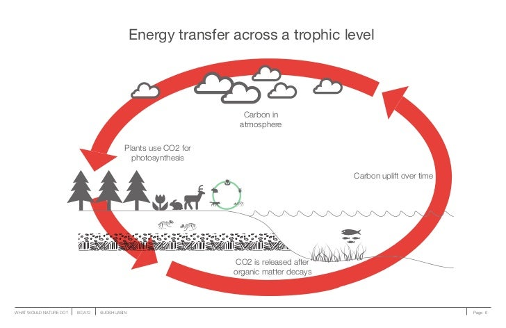Energy transfer across a trophic level                                                                 Carbon in          ...