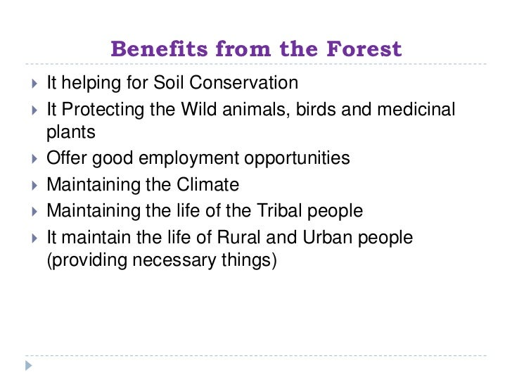 Benefits of forests essay