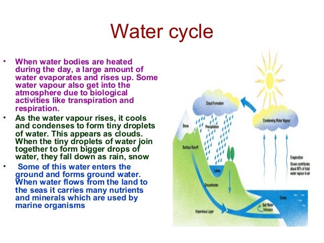 Nitrogen cycle • The nitrogen in the atmosphere is fixed into nitrogen compounds in the soil by nitrogen fixing bacteria i...