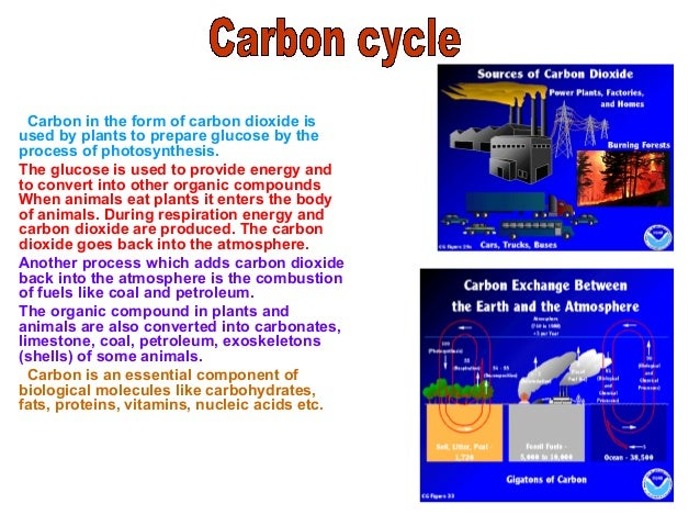 CARBON CYCLE 0011 Organic compounds In animals CoalPetroleum Carbonates in water Limestone Inorganic carbonates shells CO2...
