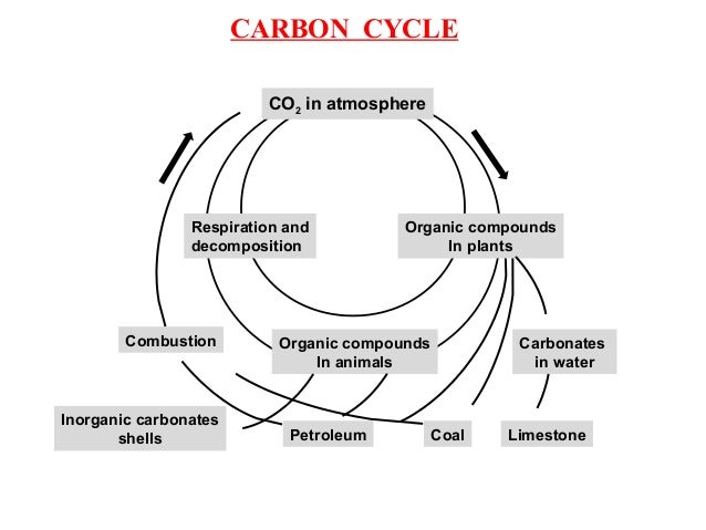 Oxygen cycle :- Oxygen in the atmosphere is used for respiration, combustion and formation of oxide of elements. Oxygen is...