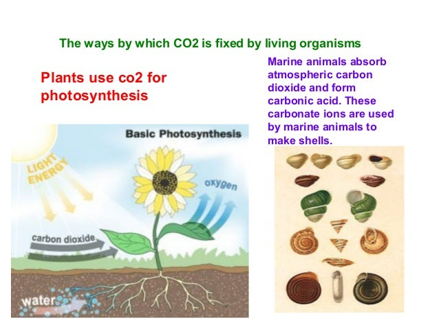 On the planets Venus and Mars carbon dioxide forms the major component constituting up to 95-97% of the atmosphere. On the...