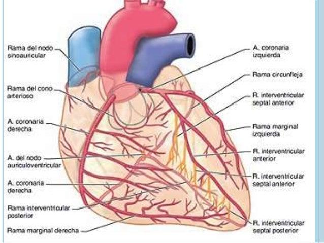 Sca anatomia coronaria 2015