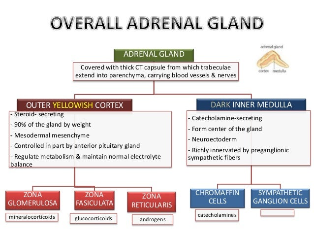 HISTOLOGY OF ADRENAL GLAND & CORRELATION WITH FUNCTION
