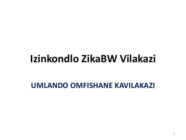 Izinkondlo ZikaBW Vilakazi UMLANDO OMFISHANE KAVILAKAZI 1