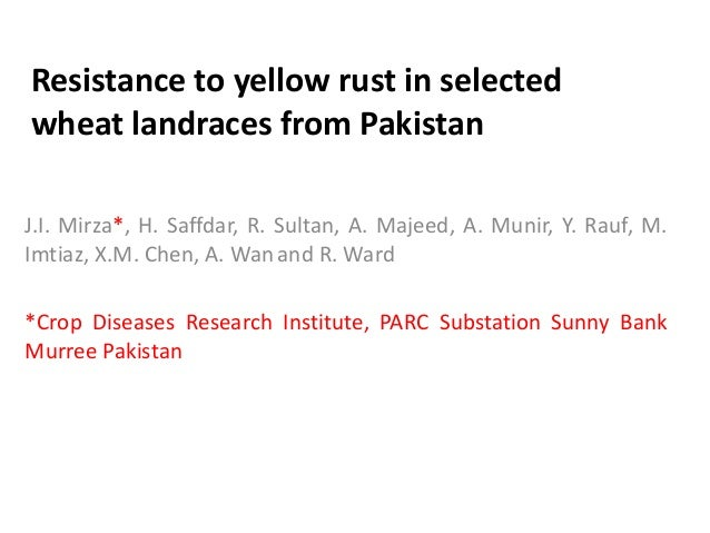 Resistance to yellow rust in selected wheat landraces from Pakistan J.I. Mirza*, H. Saffdar, R. Sultan, A. Majeed, A. Muni...