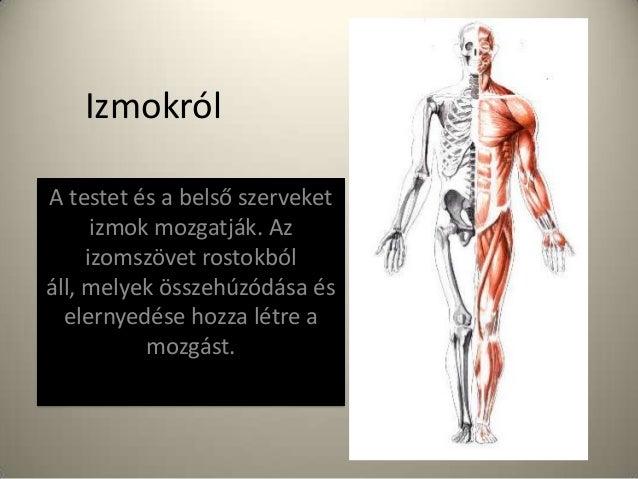 Izmokról A testet és a belső szerveket izmok mozgatják. Az izomszövet rostokból áll, melyek összehúzódása és elernyedése h...