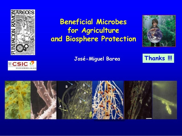 Thanks !!! Beneficial Microbes for Agriculture and Biosphere Protection B A B A B José-Miguel Barea