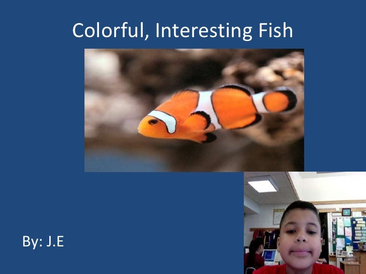 Colorful, Interesting Fish <br />By: J.E<br />