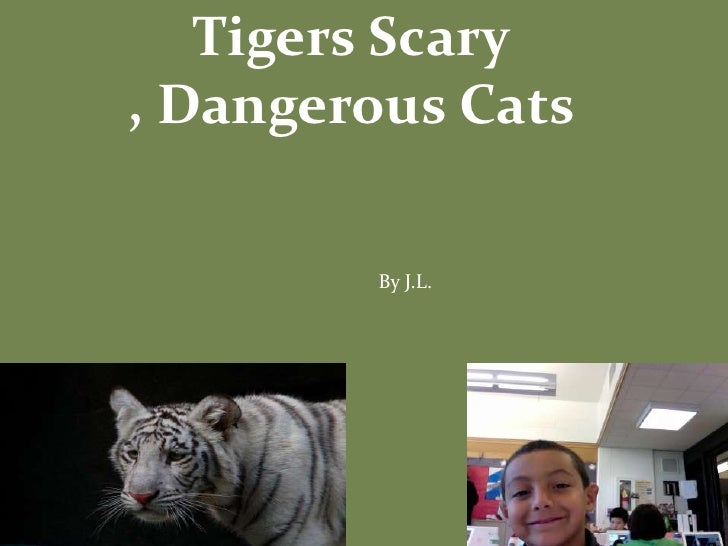 Tigers Scary , Dangerous Cats <br />By J.L.<br />