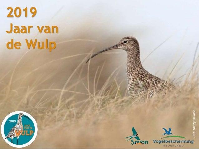 2019 Jaar van de Wulp Foto:HarveyvanDiek
