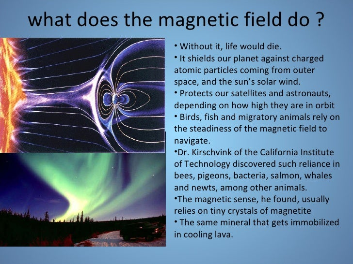 do whales guide with earth magnetic feild
