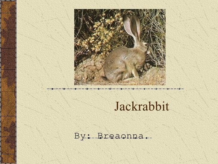 Jackrabbit By: Breaonna
