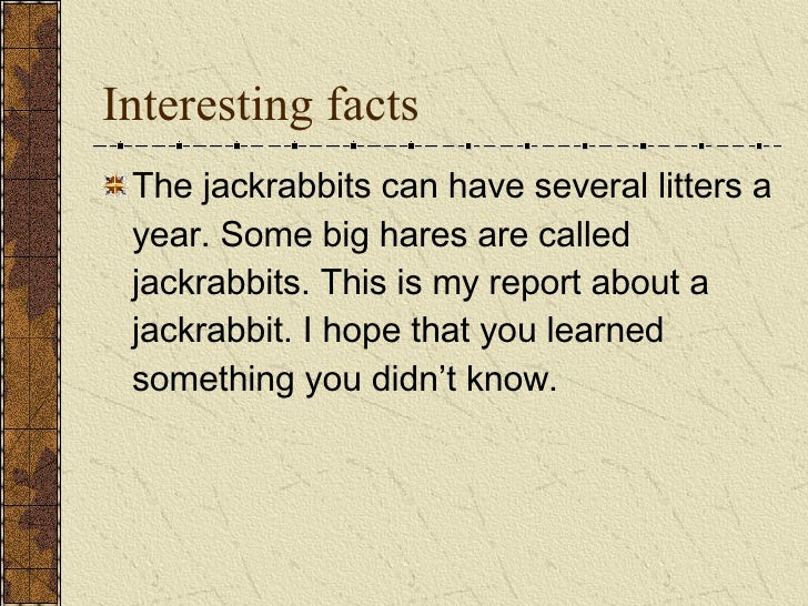Interesting facts <ul><li>The jackrabbits can have several litters a year. Some big hares are called jackrabbits. This is ...