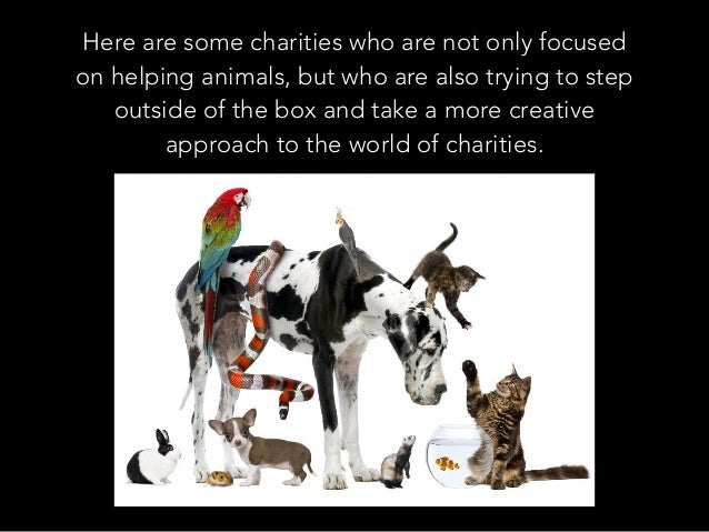 Here are some charities who are not only focused on helping animals, but who are also trying to step outside of the box an...