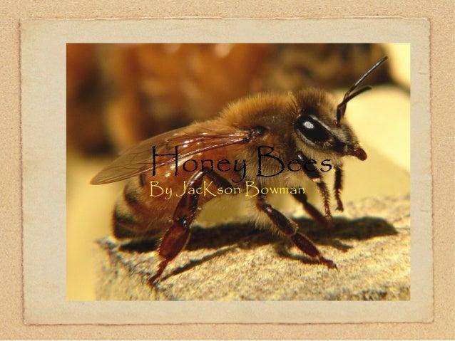 Honey Bees By JacKson Bowman