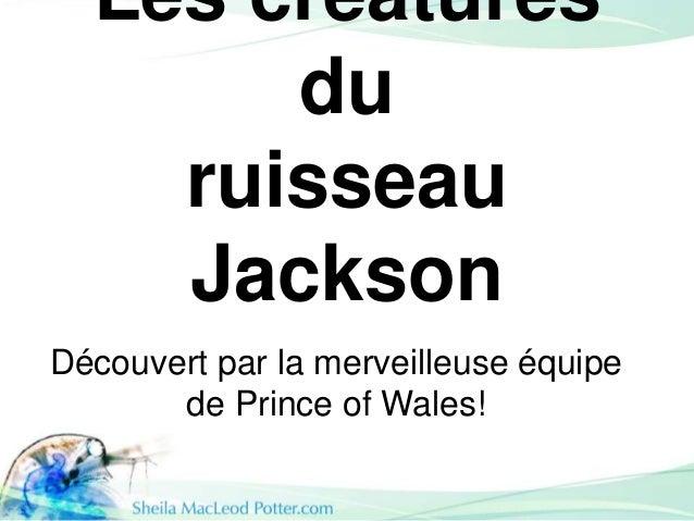 Les créatures du ruisseau Jackson Découvert par la merveilleuse équipe de Prince of Wales!