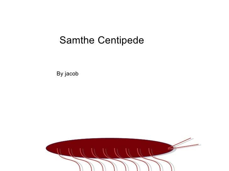 Sam the Centipede By jacob