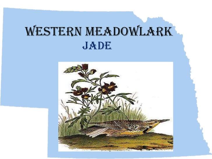 Western Meadowlark      Jade