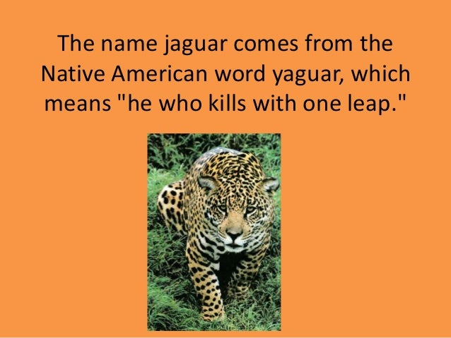 9. The Name Jaguar ...
