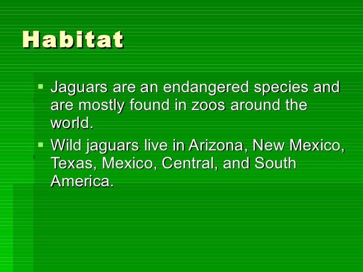 the endangered species study on jaguars in central and south america Have helped put them on the endangered species  jaguars are the largest of south america's  in remote regions of south and central america.