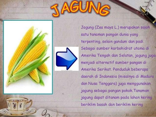 [PPT] power point tentang jagung. Lengkap!! Slide 2