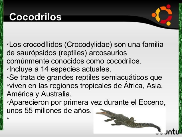 Cocodrilos ➢Los crocodílidos (Crocodylidae) son una familia de saurópsidos (reptiles) arcosaurios comúnmente conocidos com...