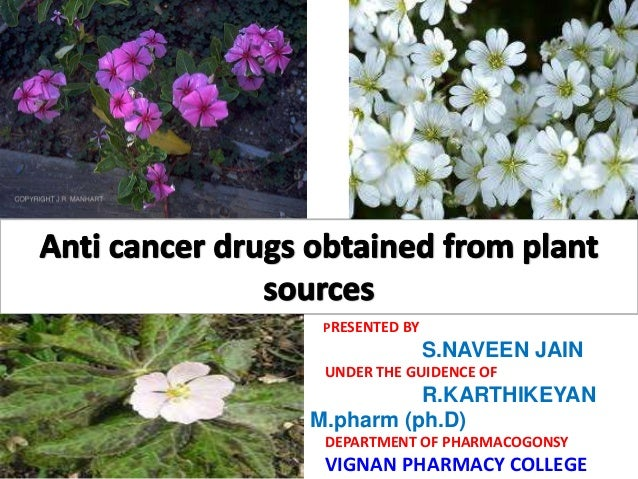 thesis on anticancer drugs Cytotoxicity of platinum anticancer drugs in mammalian cytotoxicity of platinum anticancer drugs in mammalian honors college capstone experience/thesis.