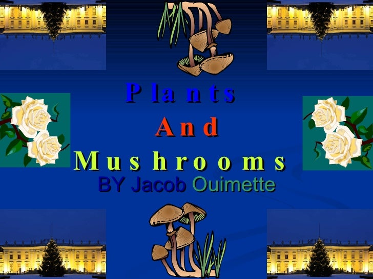 Plants   And Mushrooms BY Jacob   Ouimette