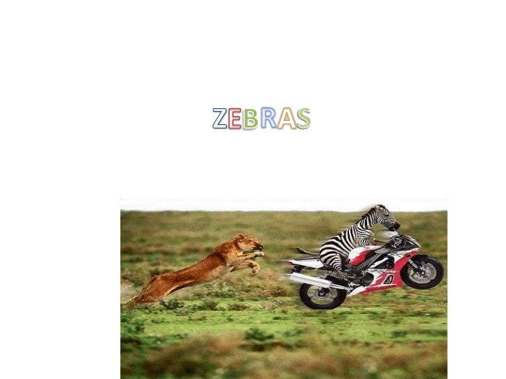 ZEBRAS<br />