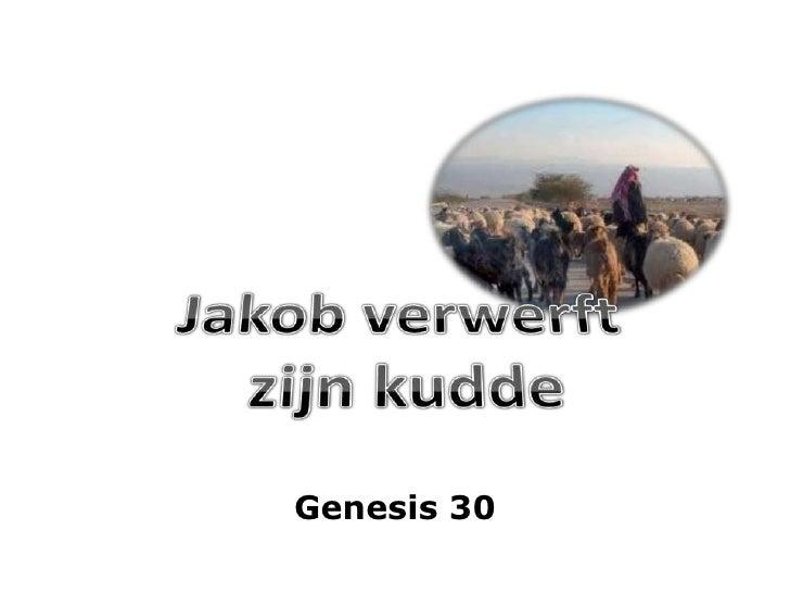 Jakob verwerft <br />zijn kudde<br />Genesis 30<br />