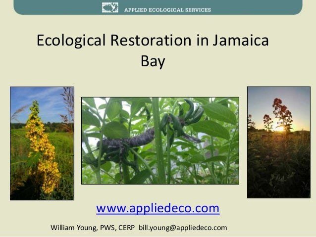 Ecological Restoration in Jamaica Bay www.appliedeco.com William Young, PWS, CERP bill.young@appliedeco.com