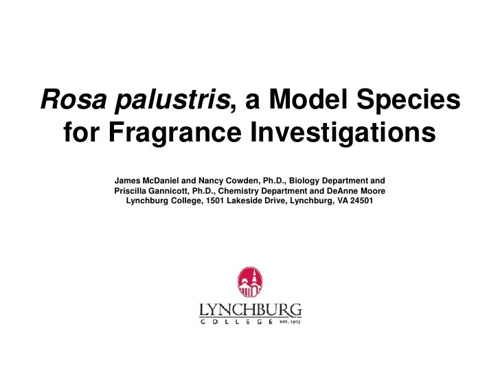Rosa palustris, a Model Species for Fragrance Investigations     James McDaniel and Nancy Cowden, Ph.D., Biology Departmen...