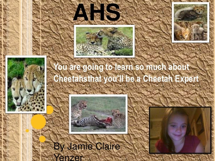 Cheetahs<br />You are going to learn so much about <br />Cheetahsthat you'll be a Cheetah Expert<br />By Jamie Claire Yenz...