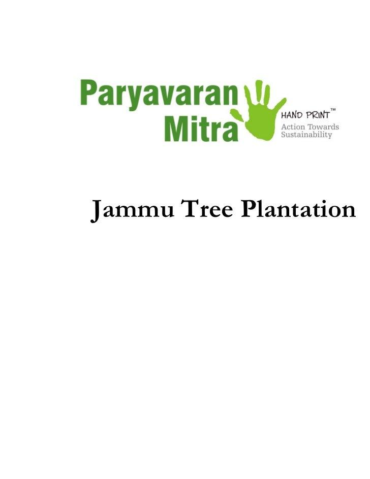 Jammu Tree Plantation