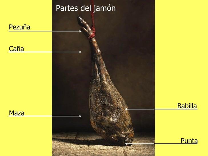 Partes del jamón Pezuña Caña Maza Babilla Punta
