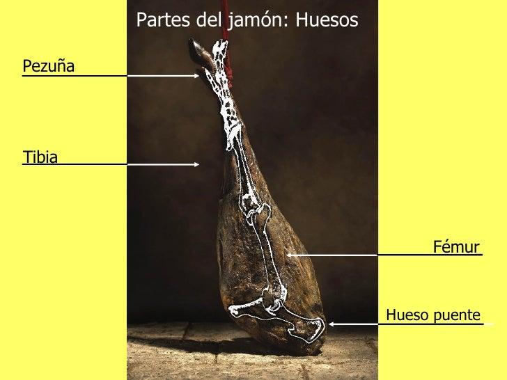 Partes del jamón: Huesos Fémur Hueso puente Pezuña Tibia