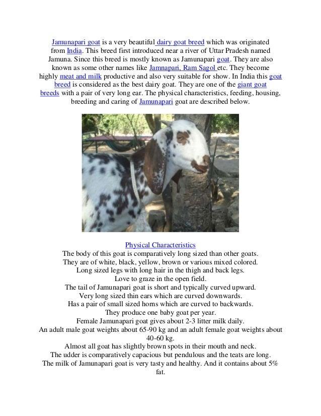 Jamunapari a dairy goat breed in india
